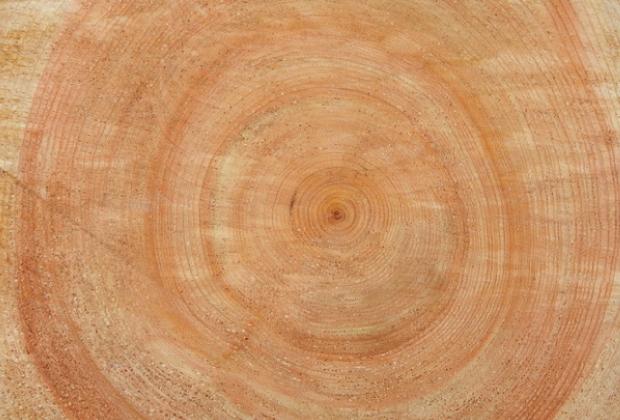 年輪幅が狭く、完満直通、無節、色目の良さ。高い評価の吉野杉