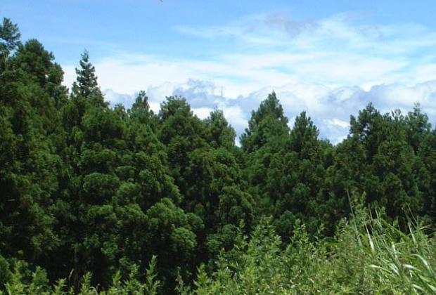 村のほとんどが豊かな森林